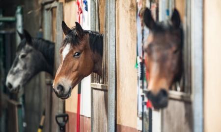 boxe pour chevaux à Caumont