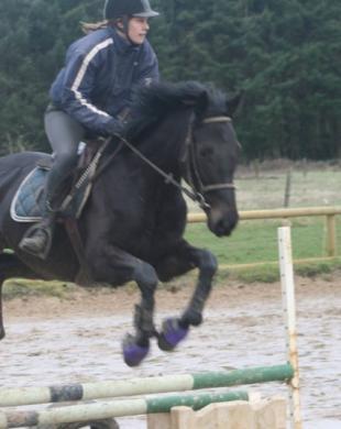Parcours équestres lors de nos cours d'équitation