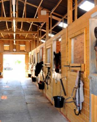 Box intérieurs pour chevaux