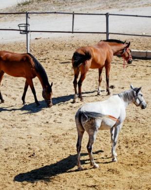 Carrière d'entrainement pour chevaux