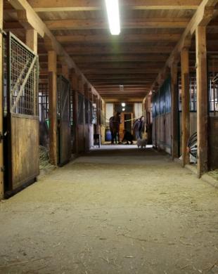 Écurie pour chevaux en pensions
