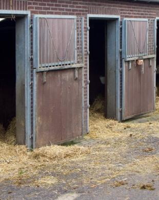 Box pour chevaux - Demi pension
