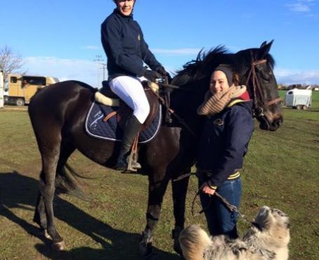 sociabilité du cheval
