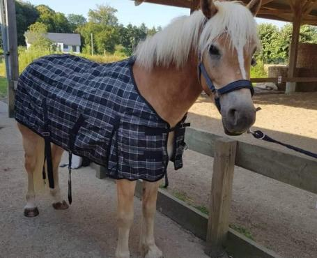 Soins quotidiens pour chevaux